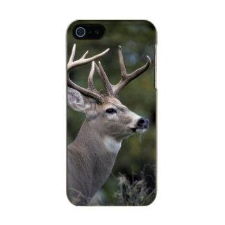 NA, USA, Washington State, White-tailed deer, Incipio Feather® Shine iPhone 5 Case