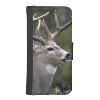 NA, USA, Washington State, White-tailed deer, iPhone SE/5/5s Wallet Case