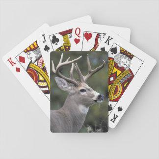 NA, USA, Washington State, White-tailed deer, Playing Cards