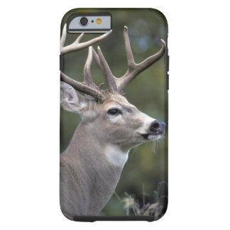 NA, USA, Washington State, White-tailed deer, Tough iPhone 6 Case