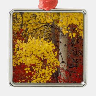 NA, USA, Washington, Wenatchee National Forest. Christmas Ornament