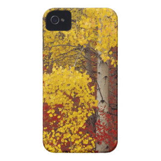 NA, USA, Washington, Wenatchee National Forest. iPhone 4 Case-Mate Cases