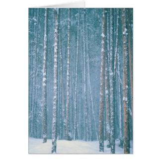 NA, USA, WY. Snowy winter scene among Card