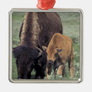 NA, USA, Wyoming, Yellowstone National Park. Silver-Colored Square Decoration
