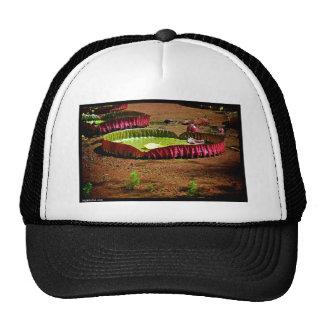 Naik Michel Photography Hawaii 007 Mesh Hats