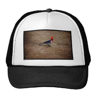 Naik Michel Photography Hawaii 010 Trucker Hat