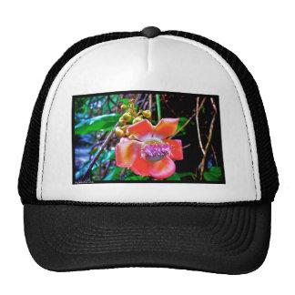 Naik Michel Photography Hawaii. Wallpapers images Hats
