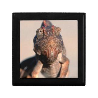 Namaqua Chameleon (Chamaeleo Namaquensis) Gift Box