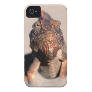 Namaqua Chameleon (Chamaeleo Namaquensis) iPhone 4 Cases