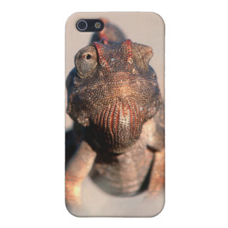 Namaqua Chameleon (Chamaeleo Namaquensis) iPhone 5/5S Cases