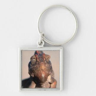 Namaqua Chameleon (Chamaeleo Namaquensis) Key Ring