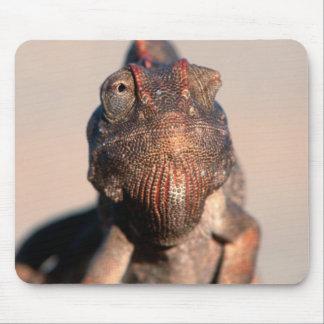 Namaqua Chameleon (Chamaeleo Namaquensis) Mouse Mat