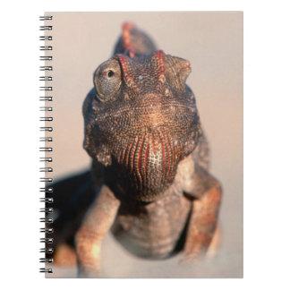 Namaqua Chameleon (Chamaeleo Namaquensis) Notebook