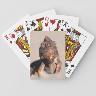 Namaqua Chameleon (Chamaeleo Namaquensis) Playing Cards