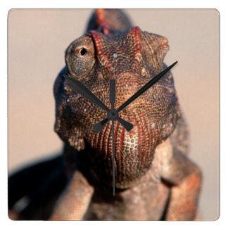 Namaqua Chameleon (Chamaeleo Namaquensis) Square Wall Clock