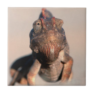 Namaqua Chameleon (Chamaeleo Namaquensis) Tile