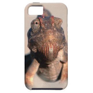 Namaqua Chameleon (Chamaeleo Namaquensis) Tough iPhone 5 Case