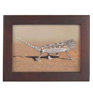 Namaqua Chameleon, Namib Desert, Namib-Naukluft Keepsake Box