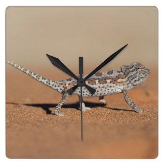 Namaqua Chameleon, Namib Desert, Namib-Naukluft Square Wall Clock