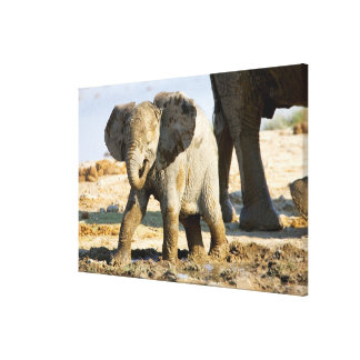 Namibia, Africa: Baby African Elephant Canvas Print