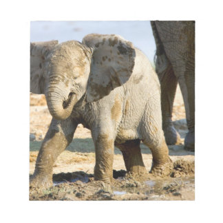 Namibia, Africa: Baby African Elephant Notepad