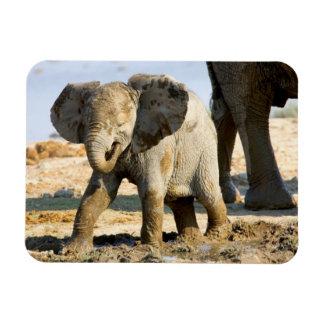 Namibia, Africa: Baby African Elephant Rectangular Photo Magnet