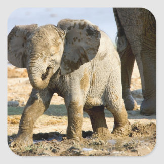 Namibia, Africa: Baby African Elephant Square Sticker