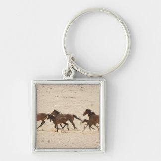 Namibia, Aus. Group of running wild horses on Key Ring