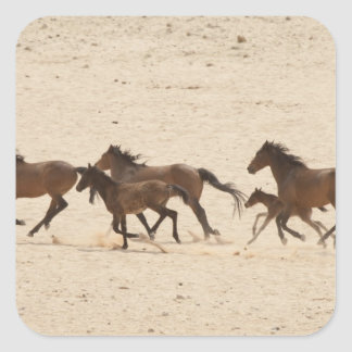 Namibia, Aus. Group of running wild horses on Square Sticker