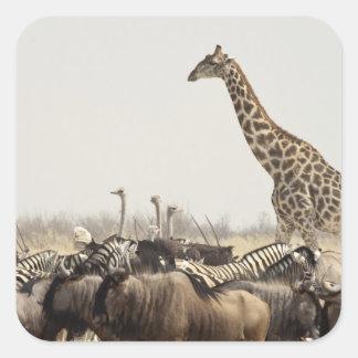 Namibia, Etosha National Park. A lone giraffe Square Sticker