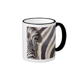 Namibia, Etosha National Park. Details of two Mug