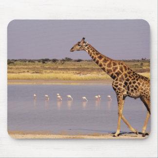 Namibia: Etosha National Park Mouse Mat