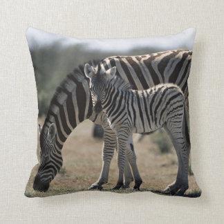 Namibia, Etosha National Park, Plain Zebra 1 Cushion