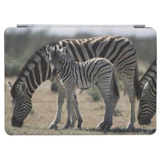 Namibia, Etosha National Park, Plain Zebra 1 iPad Air Cover