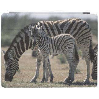 Namibia, Etosha National Park, Plain Zebra 1 iPad Cover
