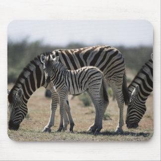 Namibia, Etosha National Park, Plain Zebra 1 Mouse Mat