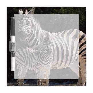 Namibia, Etosha National Park, Plains Zebra 2 Dry Erase Board