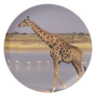 Namibia: Etosha National Park Plate
