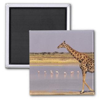Namibia: Etosha National Park Square Magnet