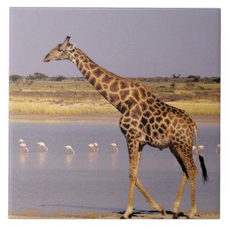 Namibia: Etosha National Park Tile