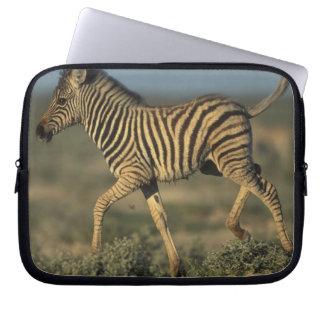 Namibia, Etosha National Park, Young Plains Laptop Sleeve