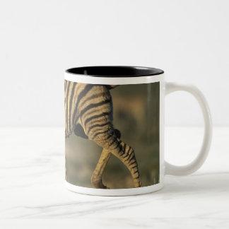 Namibia, Etosha National Park, Young Plains Mugs
