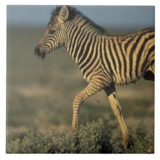 Namibia, Etosha National Park, Young Plains Tile