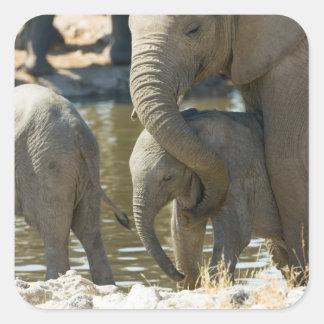 Namibia, Ongava Camp and Etosha National Park, Square Sticker