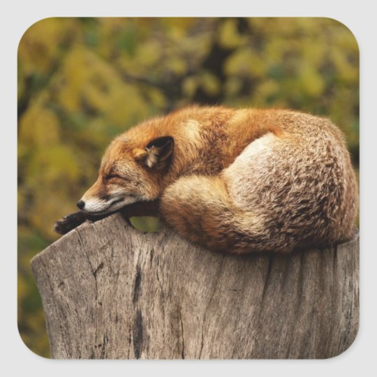 Nap Time Cute Red Fox Sticker