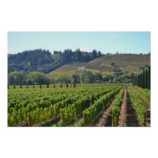 Napa Sonoma Valley Wine Country Poster