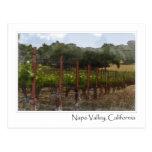 Napa Valley California Grape Vineyard