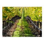 Napa Valley Vineyard in California Post Card