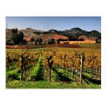 Napa Valley Vineyard Post Card
