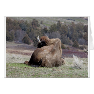 Napping Bison Card